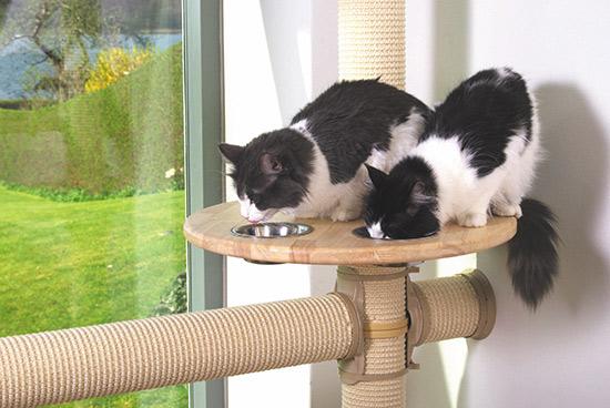 katten-no-1-klostrad-vagghangd