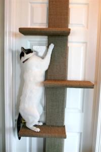 klättrande katt