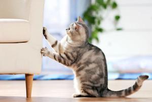 klösande katt